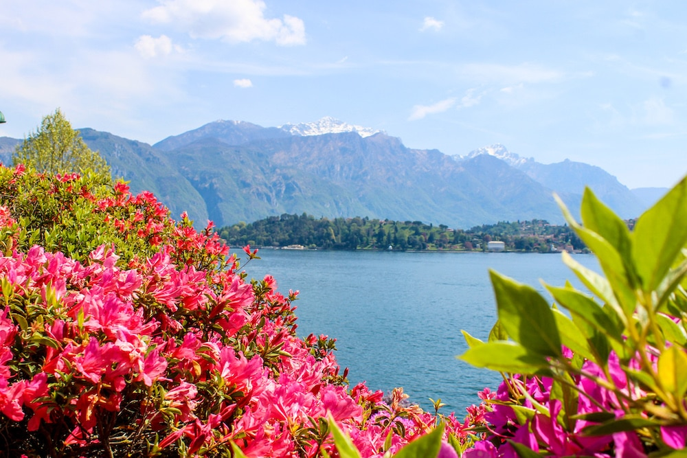 is como worth visiting? look at these lovely flowers
