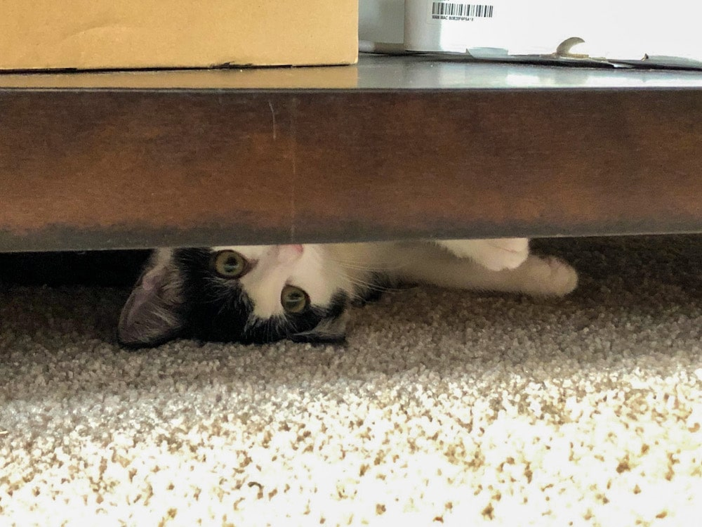 foster kittens love to hide