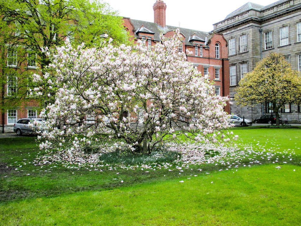 4 days in dublin in spring with blossoms