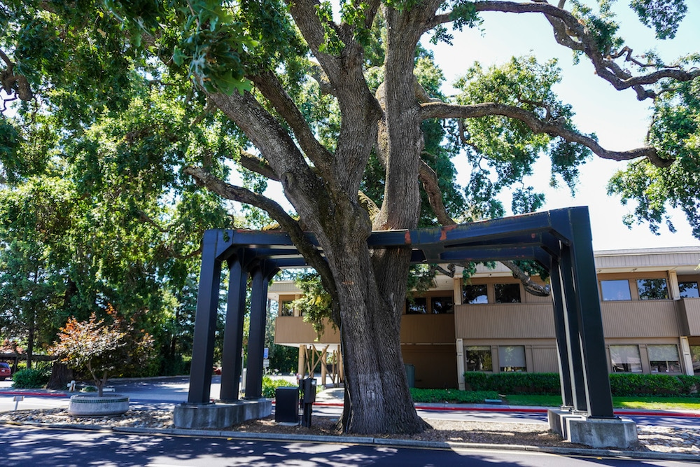 danville oak tree is another cool thing to do in danville ca