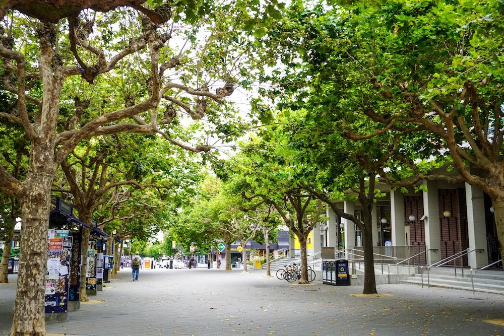 berkeley campus is beautiful and green
