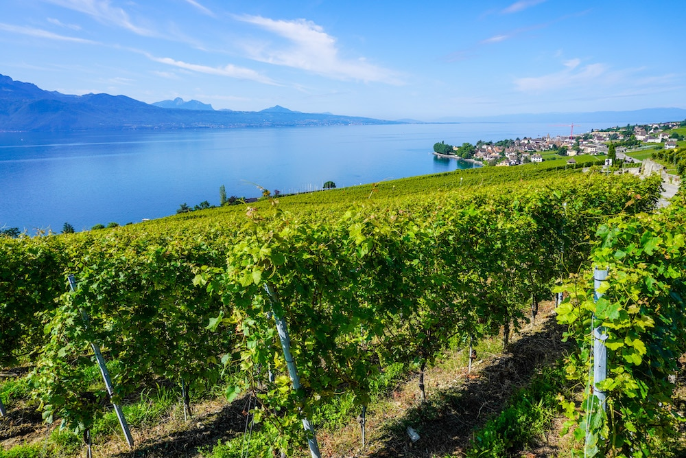 the vineyards unesco site at lake geneva