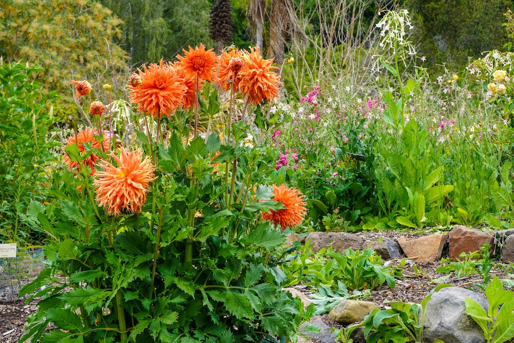 lovely flowers in berkeley botanical garden
